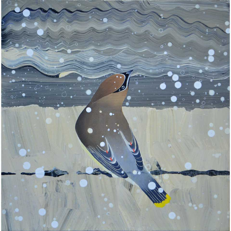Waxwing In The Snow by Diana Stetson