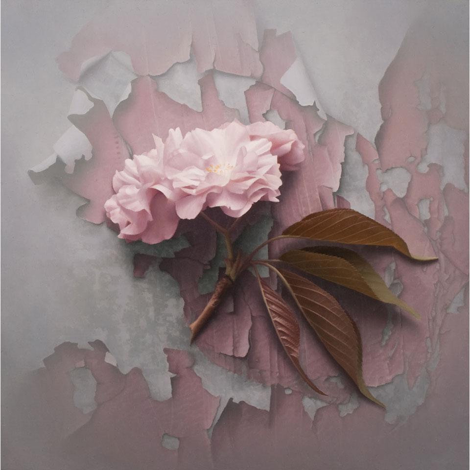 Pink Blossom by Patrick Kramer