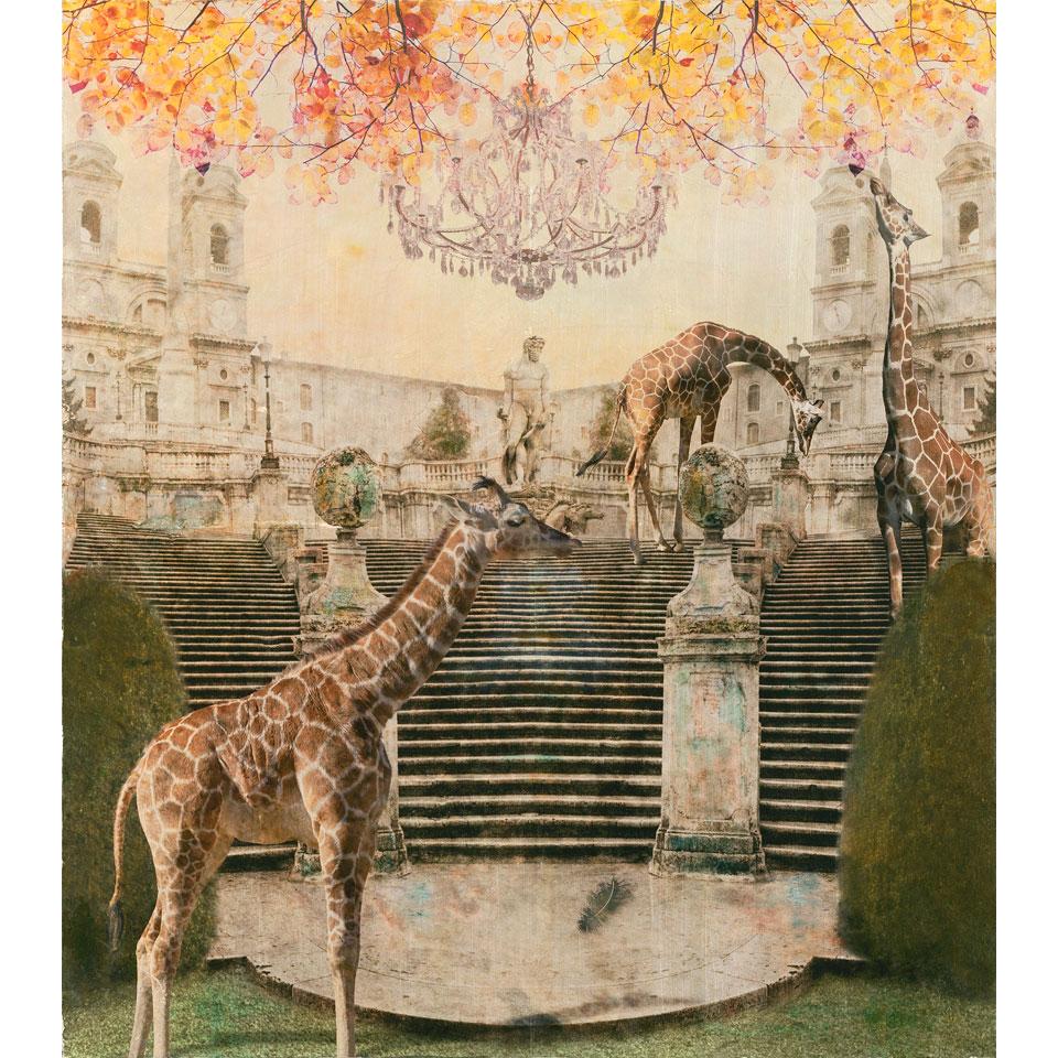 Pacata by Sondra Wampler
