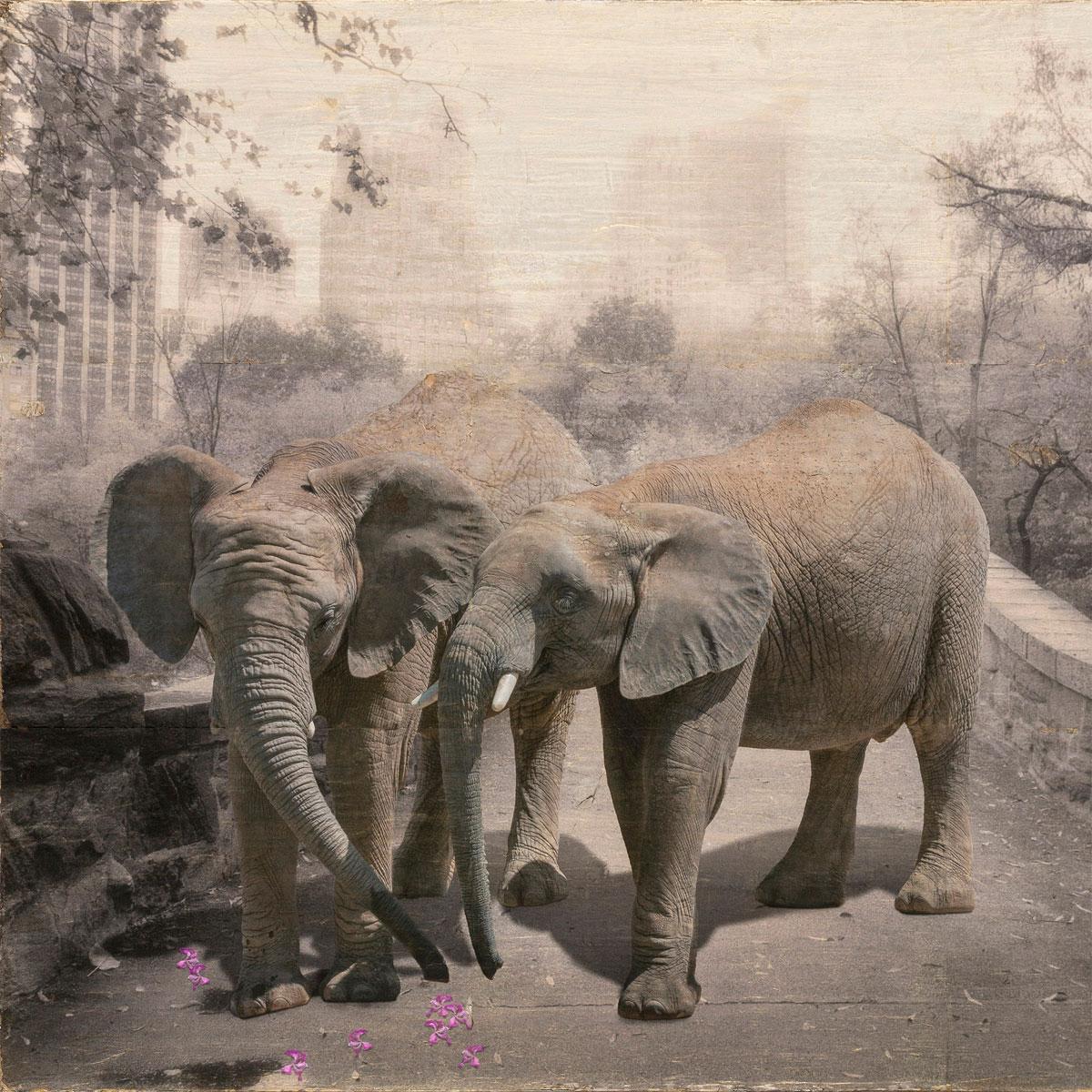 Suavitatem by Sondra Wampler